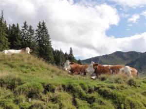 Wanderparadies Kitzbüheler Alpen - Golf & Ski Hotel Rasmushof
