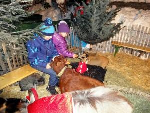 Himmlischer Advent  - Christkindlmarkt in Kitzbühel - Streichelzoo